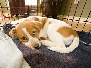 Crate Training Calms Your Dog
