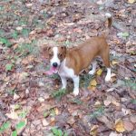 Dog Hiking - Best Dog Crates and Beds