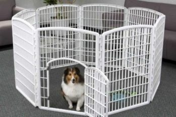 Best Dog Playpen 2016