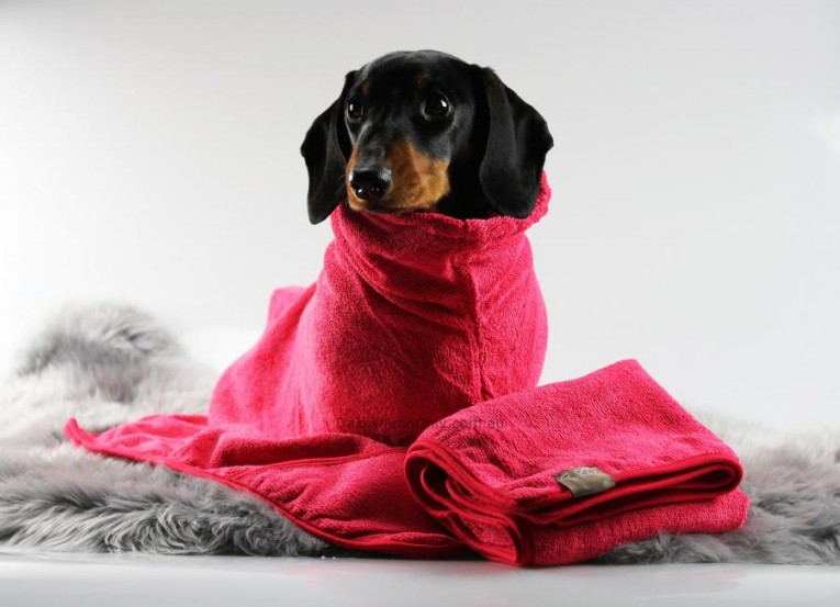 5 Tips to Keep your Dog Clean without Taking a Bath!