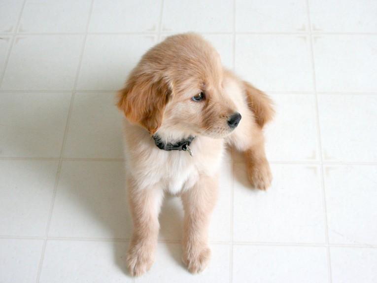 Puppy Won't Eat