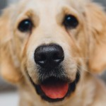 Dog Organizations