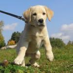 Dog First Training