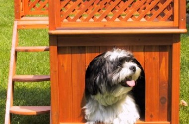 Merry Pet Wood Room with a View Pet House - Best Dog house