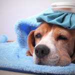 What To Do When My Dog Is Sick