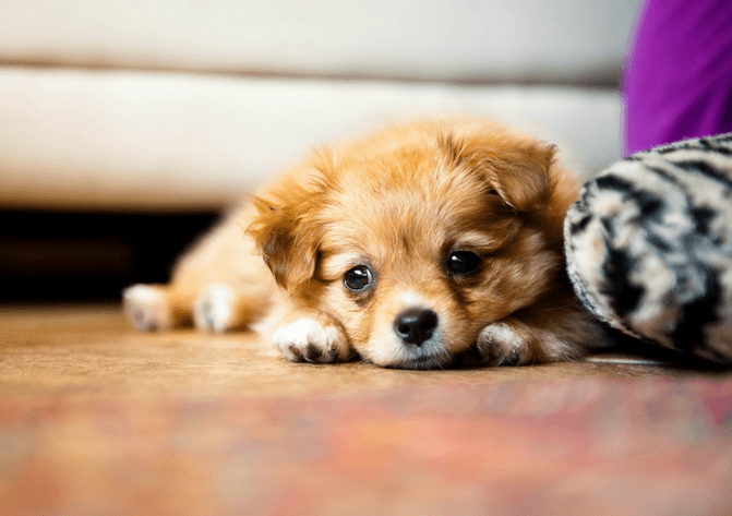 What To Do When My Puppy Has A Cold