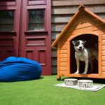 5 Must Have Items In Your Dog House