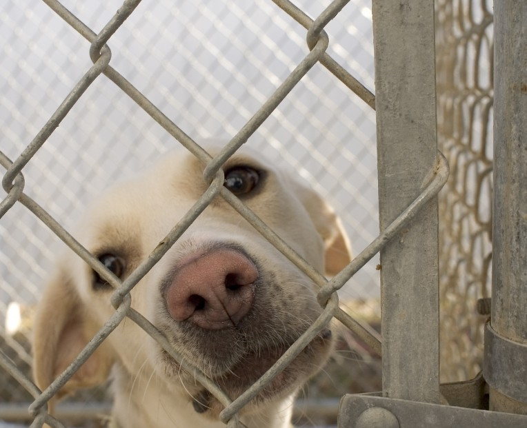 Cost of Adopting a Dog