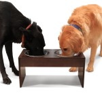 PetFusion Elevated Pet Feeder Best Elevated Dog Bowl for Large Dogs