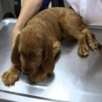 What to Expect At Puppy's First Vet Visit?