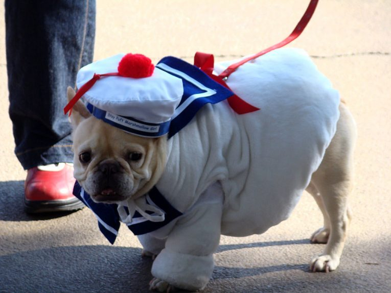 Are Dog Clothes Really Necessary