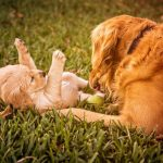 Understanding Dog Pregnancy