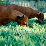 All You Need To Know About Healthy Adult Dog Food