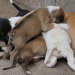 what to do when dog is having babies