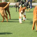 All You Need To Know About Doggy Day Care