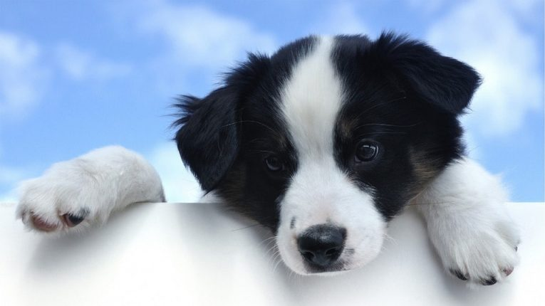 Everything You Need To Know When Getting an Orthopedic Dog Bed for Your Pet's Indoor Playpen