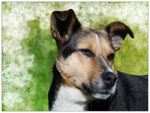 How Can The Right Dog Playpen Help You Prevent Your Dog From Developing Separation Anxiety