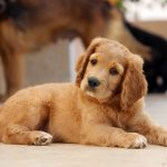 How Can a Heavy Duty Dog Playpen Help you Train your Naughty Pet-min