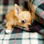 Key Reasons Why Your Dog Will Love an Orthopedic Dog Bed
