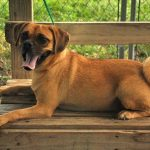 How To Ensure Maximum Physical Safety With Your Outdoor Dog Kennel Choice
