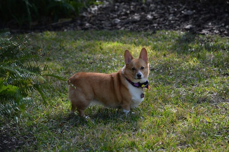Some Basic Space Management Tips For Your Outside Dog Run