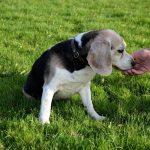 Ensuring Hygiene With Outside Dog Runs