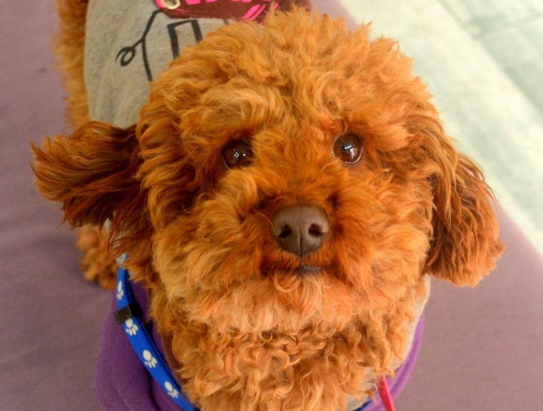 When Picking Outdoor Dog Kennels, Keep Maintenance In Mind