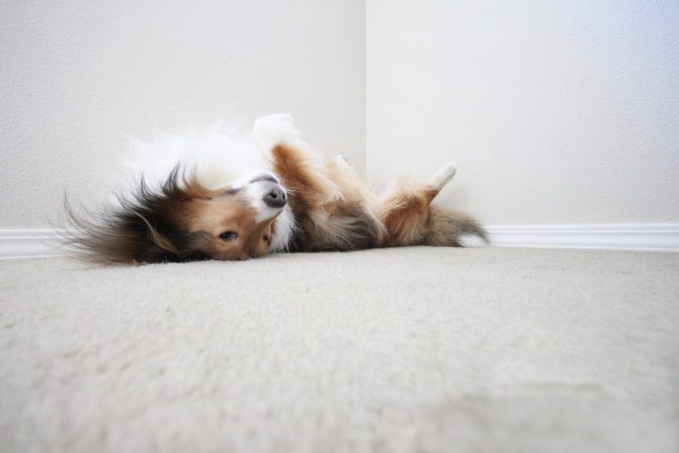 Some Reasons Why an Orthopedic Dog Bed can Keep Your Dog Healthy as it Grows Older