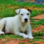 What You Need to Know Before Getting An Outdoor Dog Playpen
