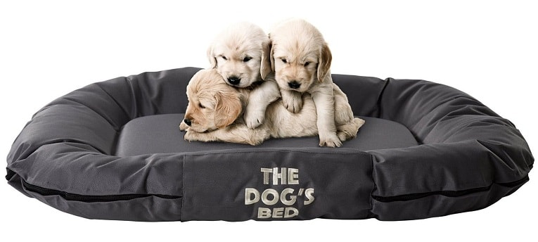 The Dog's Balls - The Dog's Bed, M 5 Review