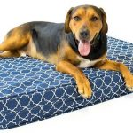 """Orthopedic Dog Bed - 5"""" Thick 