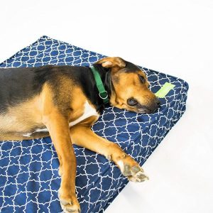 """Orthopedic Dog Bed - 5"""" Thick   Supportive Gel Memory Foam - Made in the USA   100% Cotton Removable Cover w/ Waterproof Encasement   Fully Washable   Small, Medium & Large Dogs Review"""