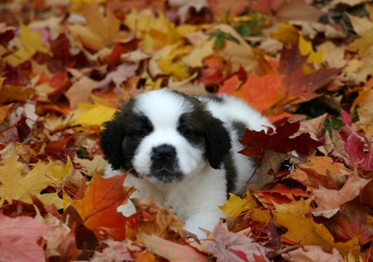 Enjoy the Fall Season with your Dog!