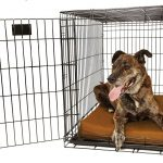 Orthopedic 4 Dog Crate Pad by Big Barker Review