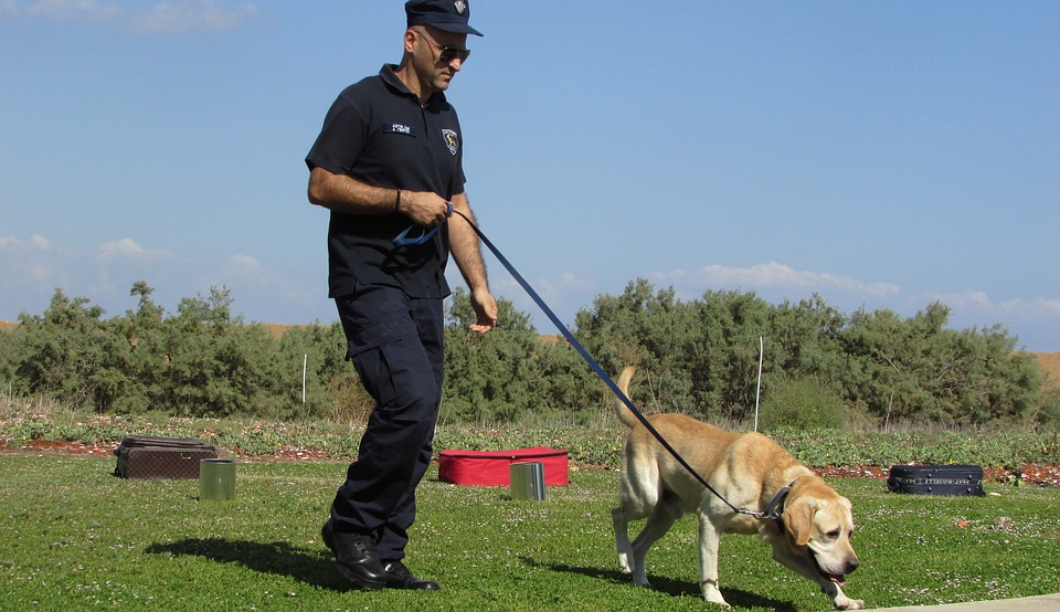 Easy and Effective Dog Training Tips