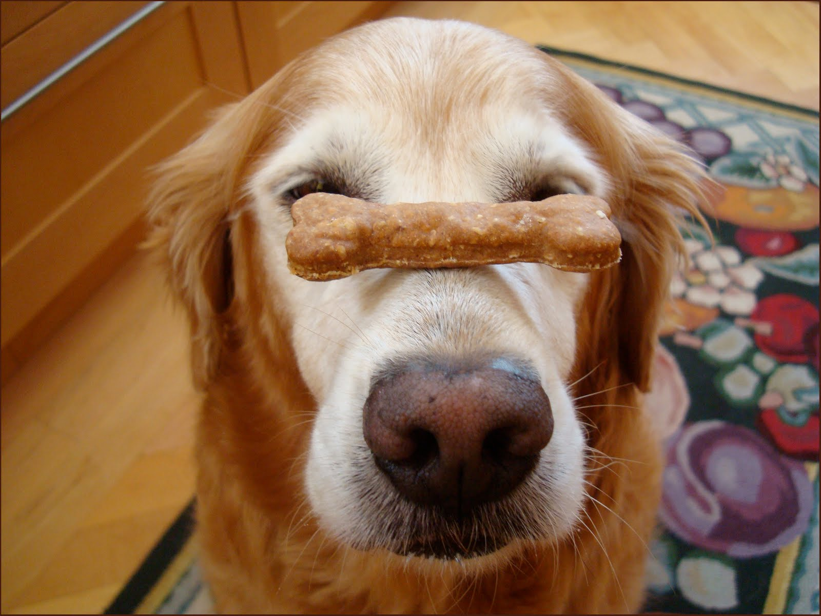Old Dogs Can Learn New Tricks