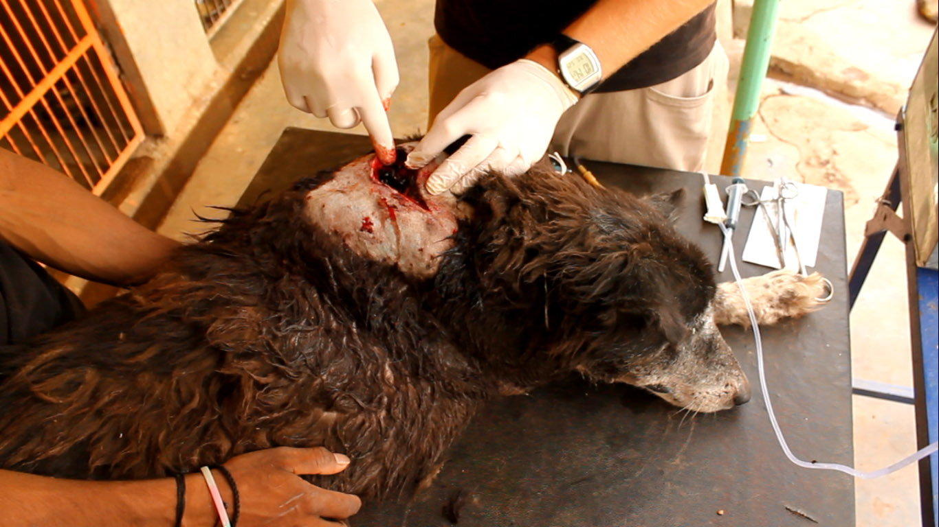 Cleaning a Cat or Dog's Wound
