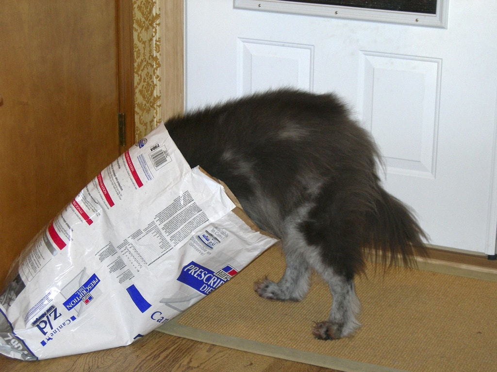 Dire Dog Dangers: Unlikely Household Items that are Dangerous for Your Dog
