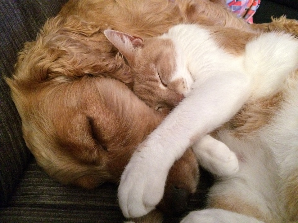 Dogs and Cats - They Can Get Along!