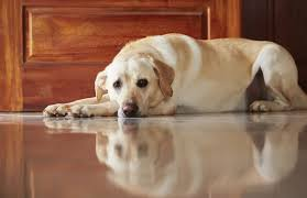 Signs Your Dog Might Be Depressed and How You Can Help