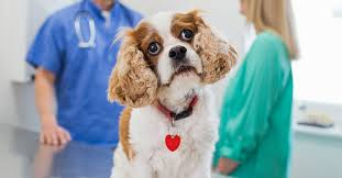 Choosing a Veterinarian for Your Dog