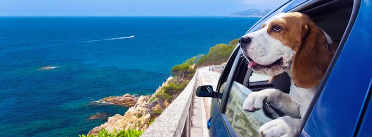 Vacationing with Your Dog