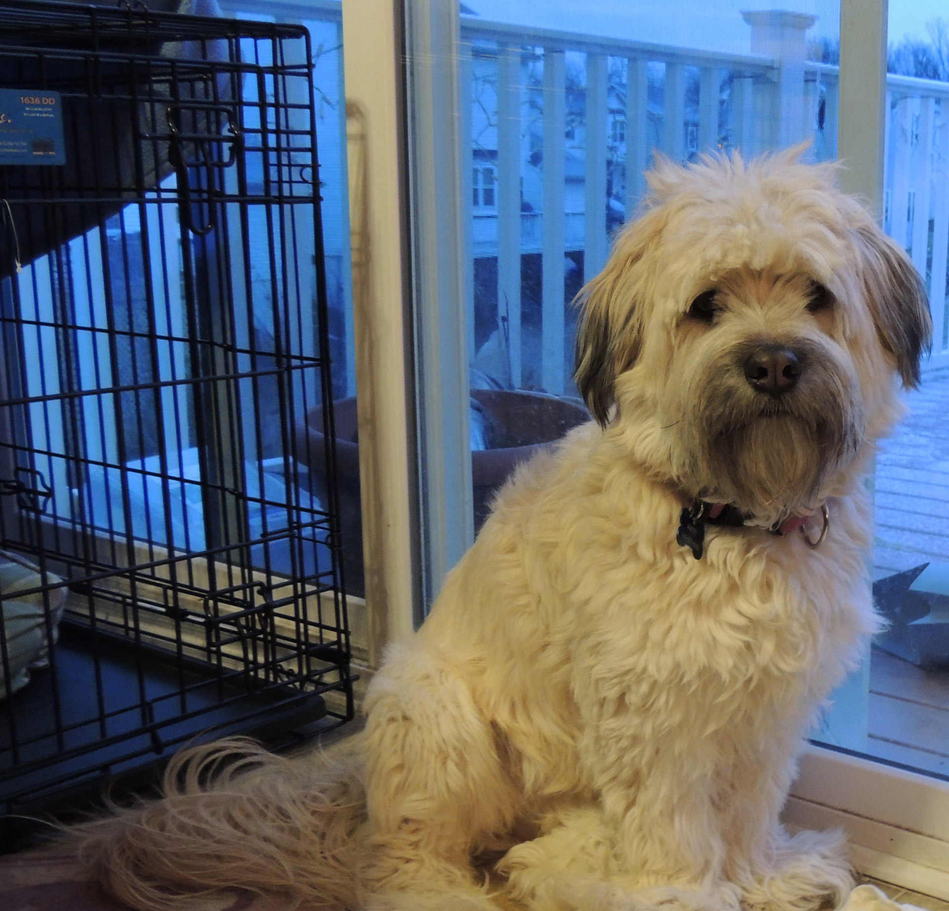 Easy Dog Crate Training Tips