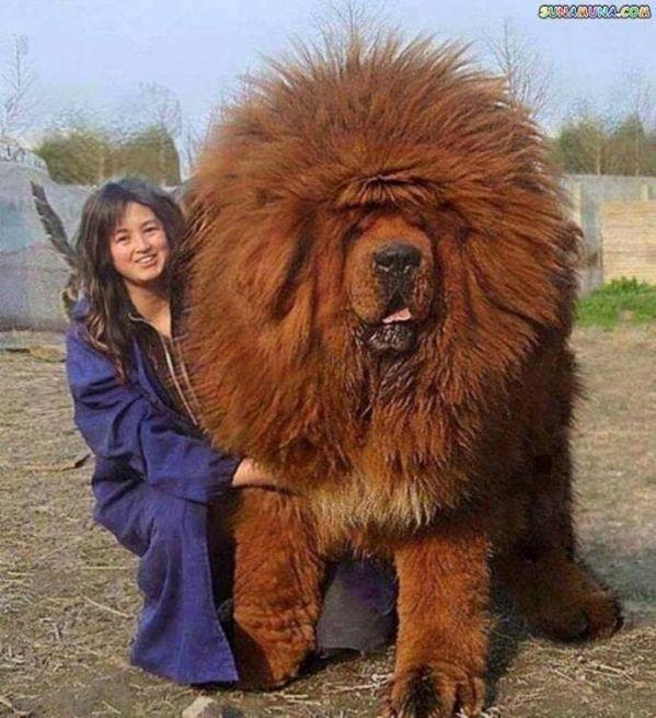 Uncontrollable Big Dog Lust Gone Wild