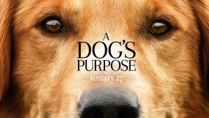 A Dog's Purpose is Coming to Theaters – Here's Why Adoption Rates Will Skyrocket