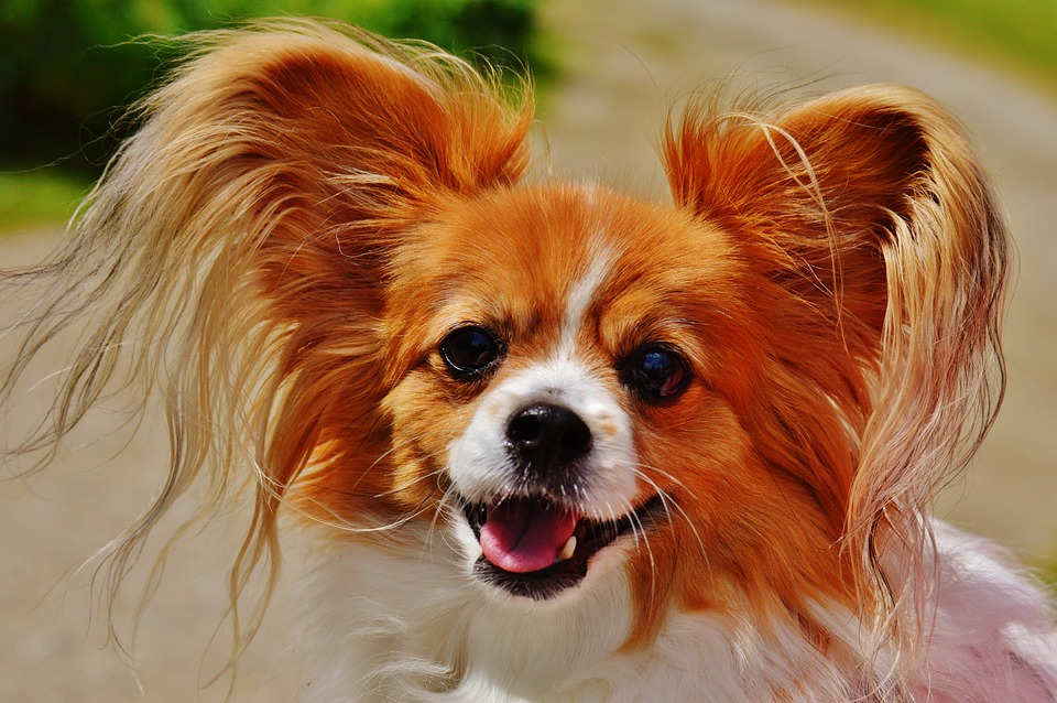 Tips for Choosing a Small Dog