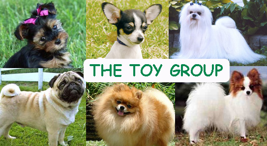 Is the Toy Group of Dogs for You?