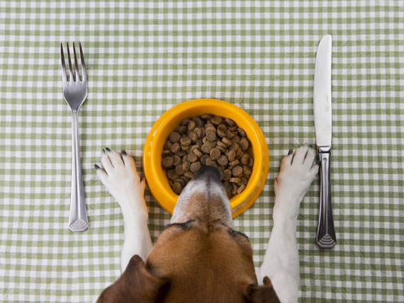 Putting Your Dog on a Diet