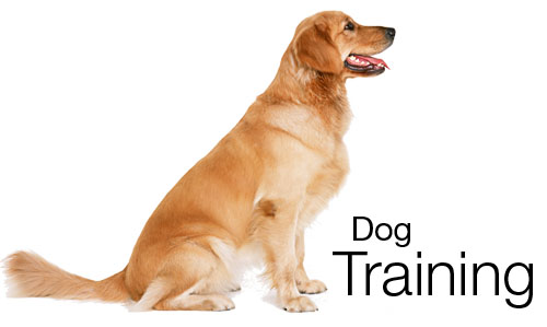 a0de5f3f34509 Dog Obedience Training - Best Dog Crates and Beds