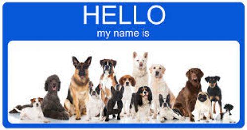 Popular Male Dog Names